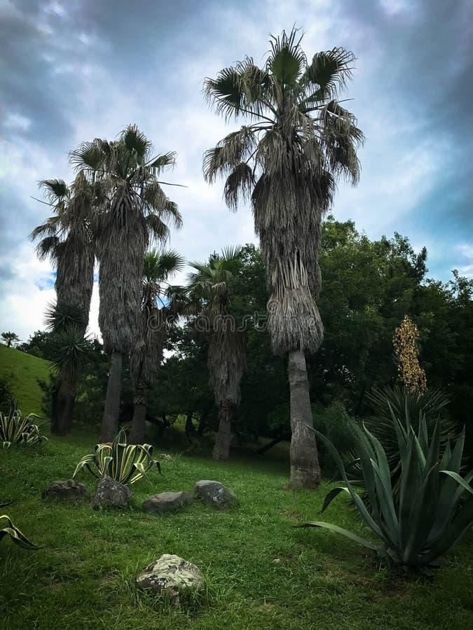 Пальмы и столетники в tropicals стоковые фотографии rf