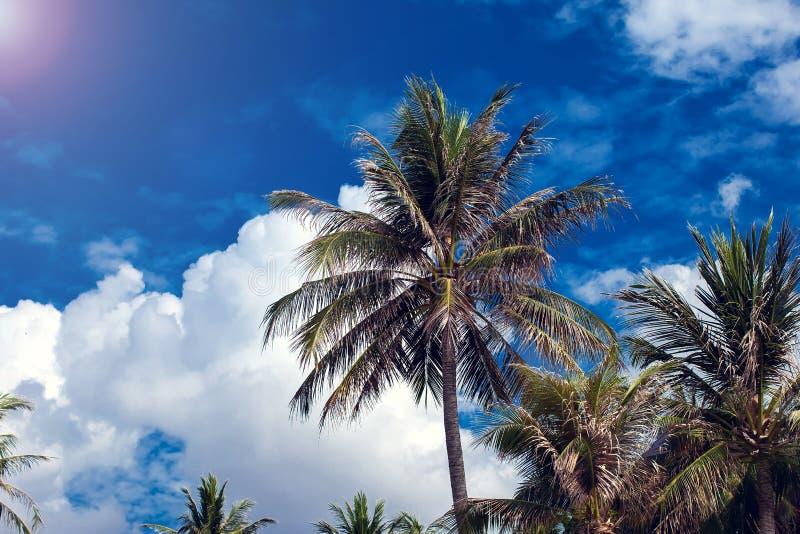 Пальмы кокоса на предпосылке голубого неба стоковая фотография rf