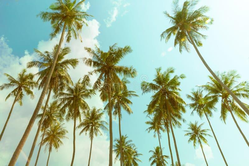 Пальмы кокоса, облачное небо стоковое фото rf