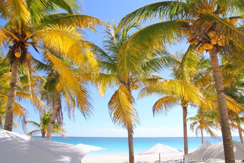 Download пальмы кокоса пляжа карибские тропические Стоковое Фото - изображение насчитывающей рай, бобра: 18390434