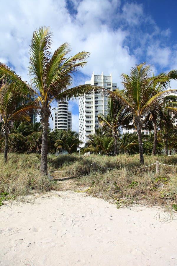 пальмы кондо пляжа стоковые фото