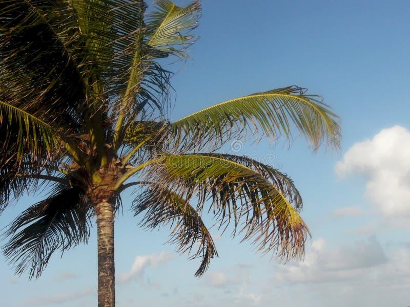 Пальмы конец вверх стоковое изображение rf