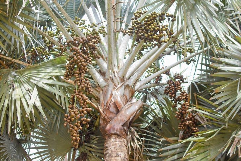 Пальмы на белой предпосылке стоковое фото rf