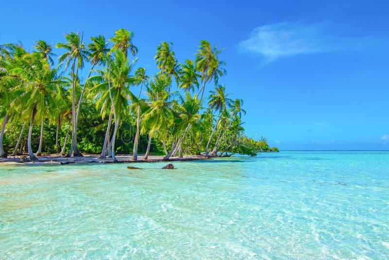 Пальмы на пляже Принципиальная схема перемещения и туризма E стоковое изображение rf
