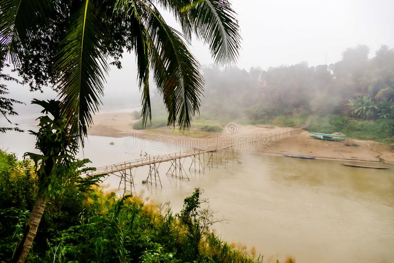пальмы на пляже, цифровом изображении фото как предпосылка стоковые изображения rf