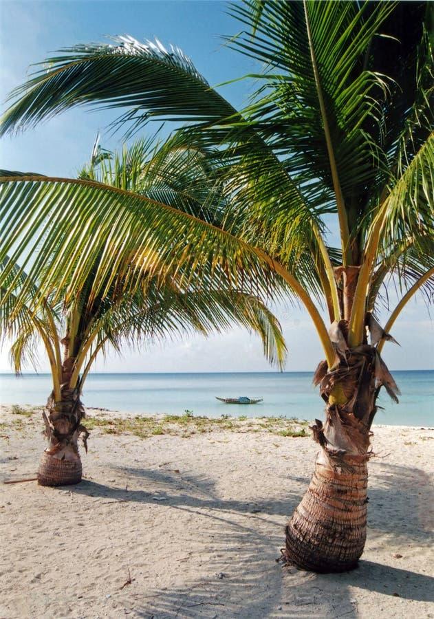 пальмы необитаемого острова пляжа Стоковое Изображение
