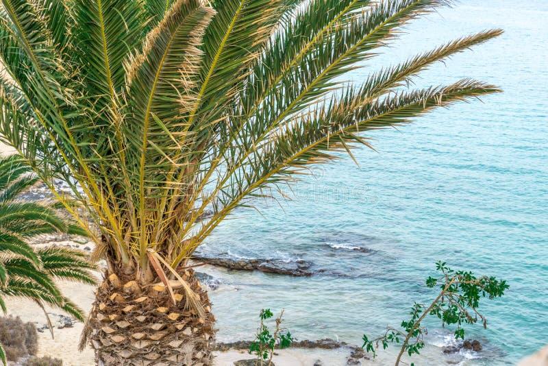 Пальмы перед пляжем стоковое фото
