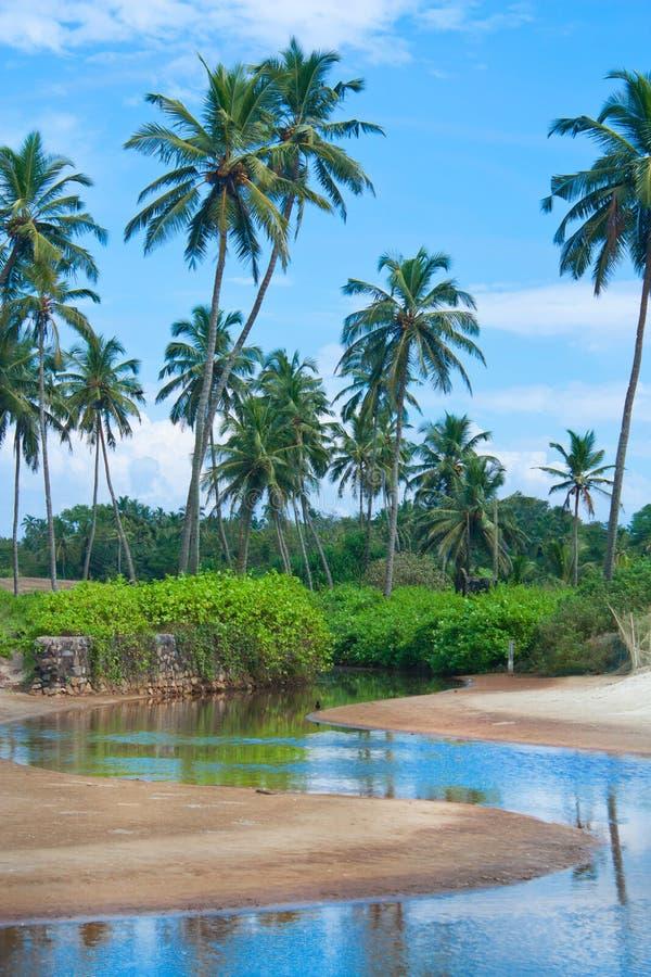 Download пальмы пляжа тропические стоковое изображение. изображение насчитывающей взморье - 18385335