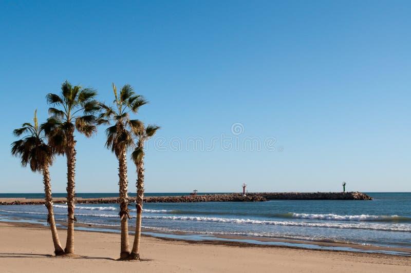 пальмы пляжа стоковые изображения rf