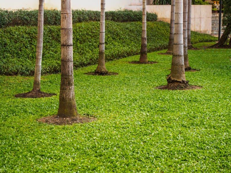 Пальмы с зеленой травой в парке стоковые изображения