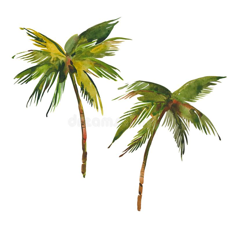 пальмы 2 иллюстрация штока