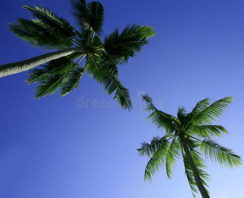 пальмы стоковые изображения rf