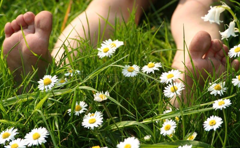пальцы ноги лета стоковая фотография