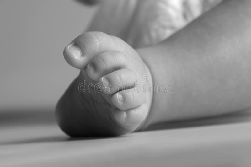пальцы ноги младенца стоковые фото