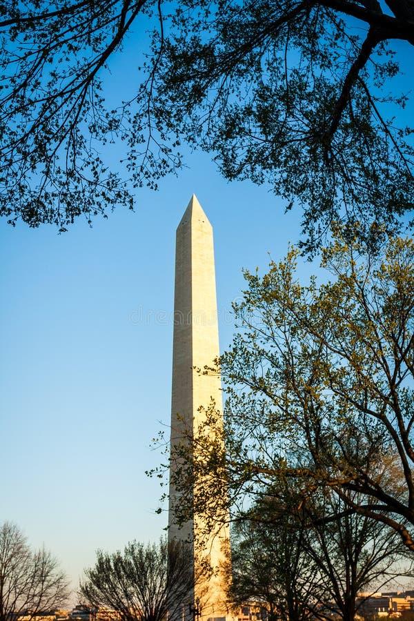 Памятник Вашингтона обрамленный деревьями стоковые изображения rf