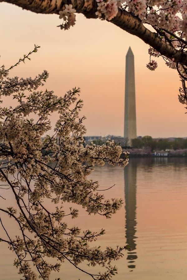 Памятник Вашингтона с другой стороны приливного таза на восходе солнца во время фестиваля вишневого цвета, Вашингтон, DC стоковое изображение