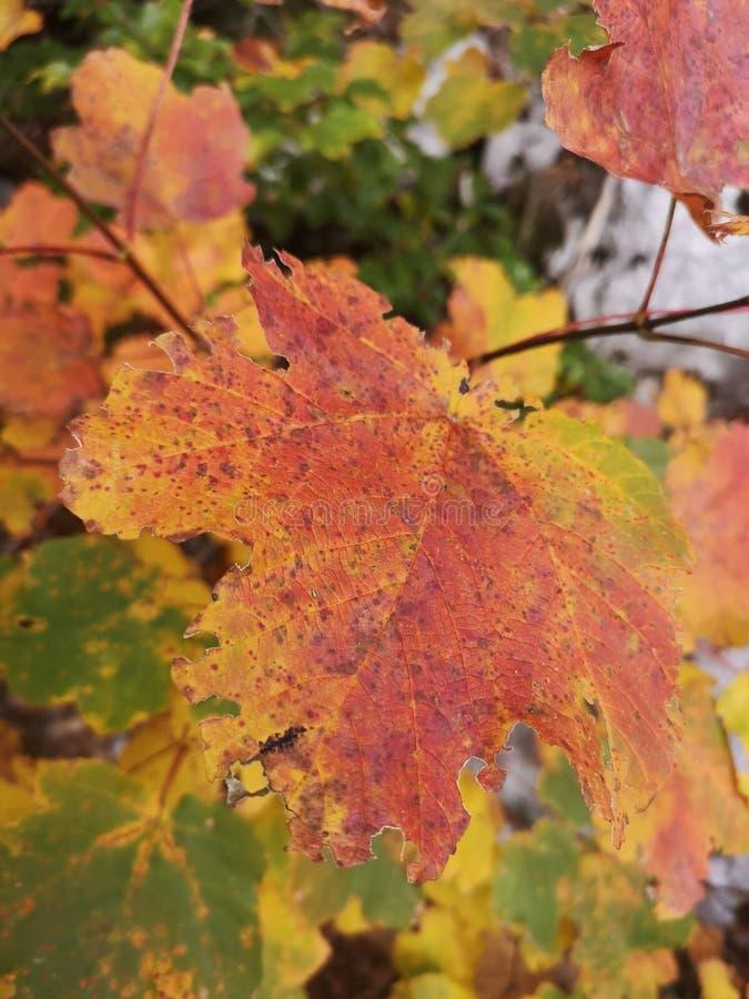 Память из горных/осенних листьев стоковая фотография rf