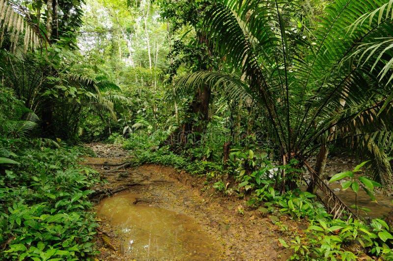 Панама, джунгли Darien стоковое фото rf