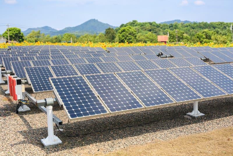 Панели солнечных батарей и предпосылка обрабатываемой земли солнцецвета стоковые фото