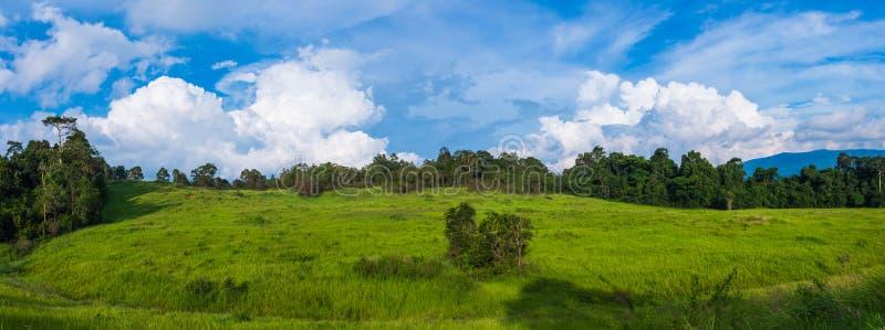 Панорама ландшафта на парке, поле против голубого неба и облака стоковая фотография rf