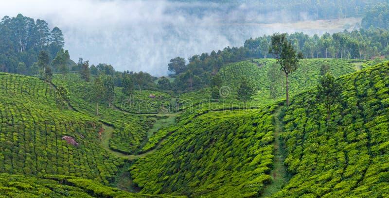 Панорама ландшафта плантаций и горы чая в Munnar, Ke стоковое изображение