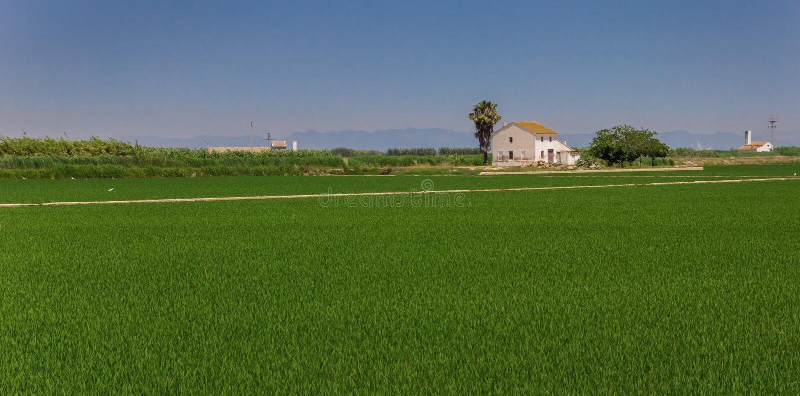 Панорама Белого Дома в полях риса Ла Albufera стоковые фотографии rf
