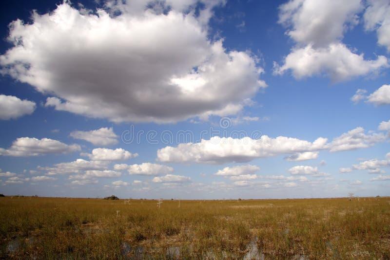 панорама болотистых низменностей стоковое фото rf