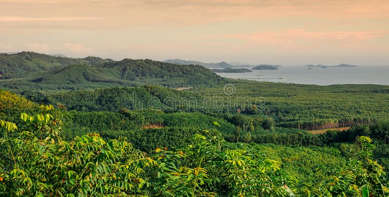 Панорама горного вида с зеленым деревом стоковое фото