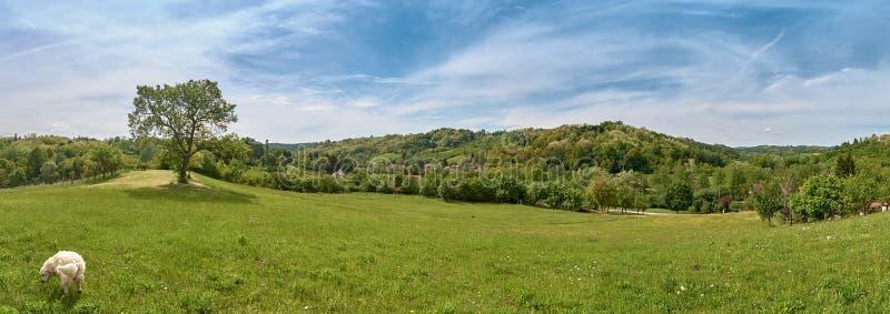 Панорама деревни Ciglenica около дня Kutina весной солнечного стоковое фото