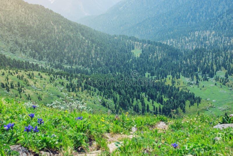 Панорама долины горы покрытой с зеленым лесом в тумане стоковые изображения rf