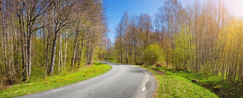 Панорама дороги на солнечный весенний день стоковые фото