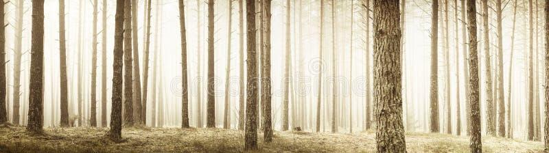 Панорама деревьев стоковое фото