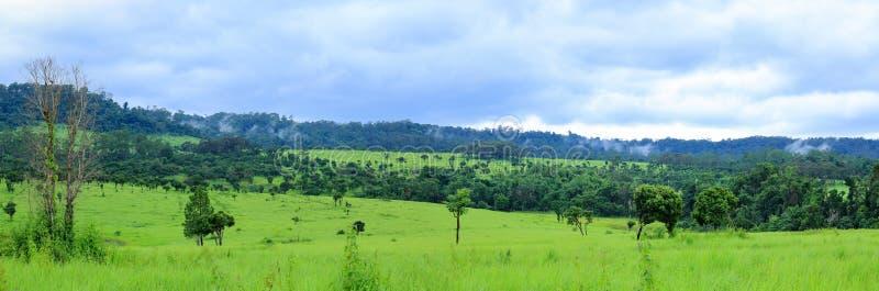 Панорама леса, зеленое поле и гора благоустраивают взгляд стоковая фотография rf