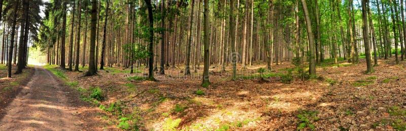 Панорама леса стоковое изображение rf