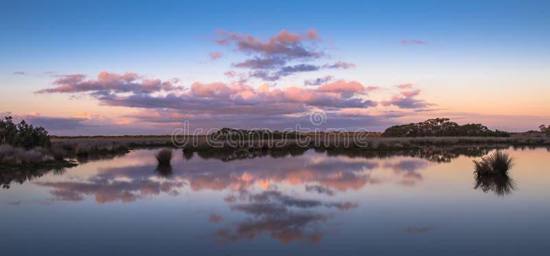 Панорама заболоченных мест утра стоковая фотография rf