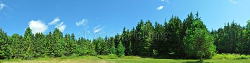 панорама зеленого цвета пущи стоковые фото