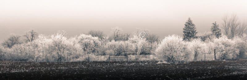 Панорама зимы сельская стоковая фотография