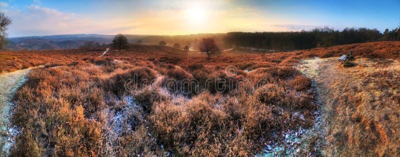 Панорама зимы стоковые изображения