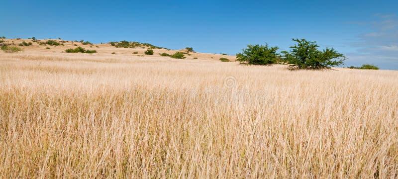 панорама злаковика открытая стоковое изображение