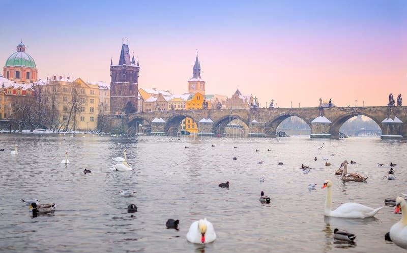Панорама Карлова моста, Праги на заходе солнца чехословакско стоковое изображение rf