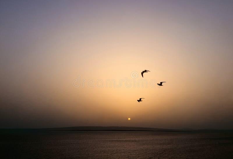 Панорама красивого озера в горах на заходе солнца стоковая фотография rf