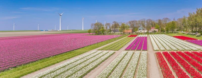 Панорама красочные тюльпаны field и ветротурбины стоковые изображения
