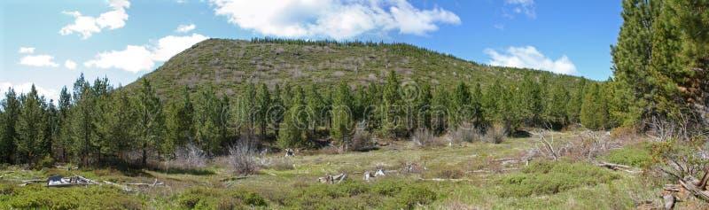 Панорама национального леса Deschutes стоковые фотографии rf