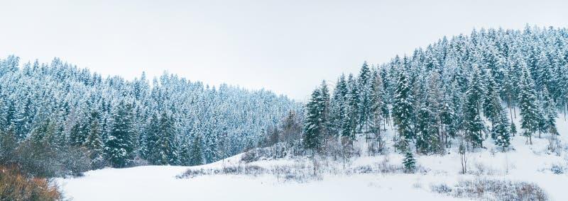 Панорама на высоких горах Tatra, Словакия соснового леса Snowy стоковые фото