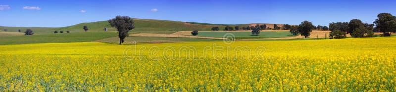 Панорама обрабатываемой земли страны NSW стоковое фото rf