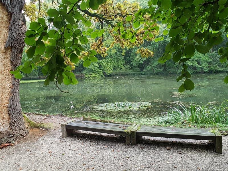 панорама озера леса от стенда на береге стоковая фотография rf