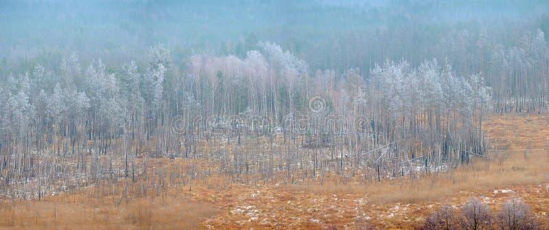 Панорама от воздуха красивого района леса стоковое изображение rf