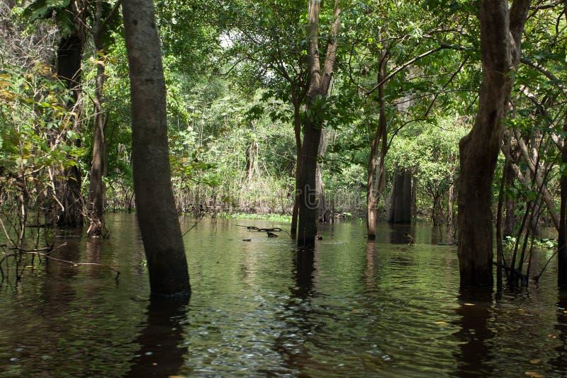 Панорама от тропического леса Амазонки, бразильская область заболоченного места стоковое фото rf