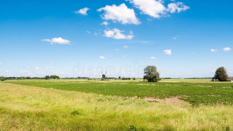 Панорама польдера и 2 ветрянок, Нидерландов стоковое изображение