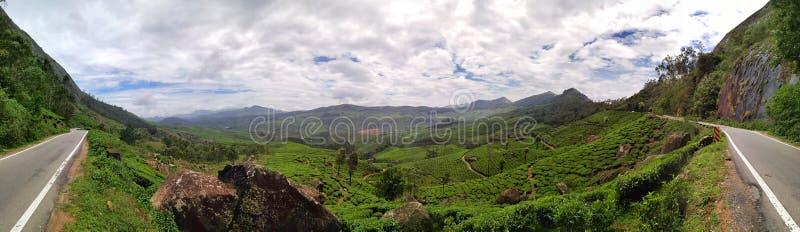 Панорама плантаций чая в Индии стоковое изображение rf